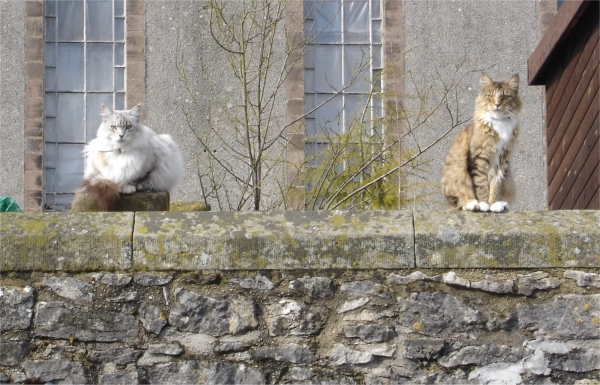 Photo of guard cats